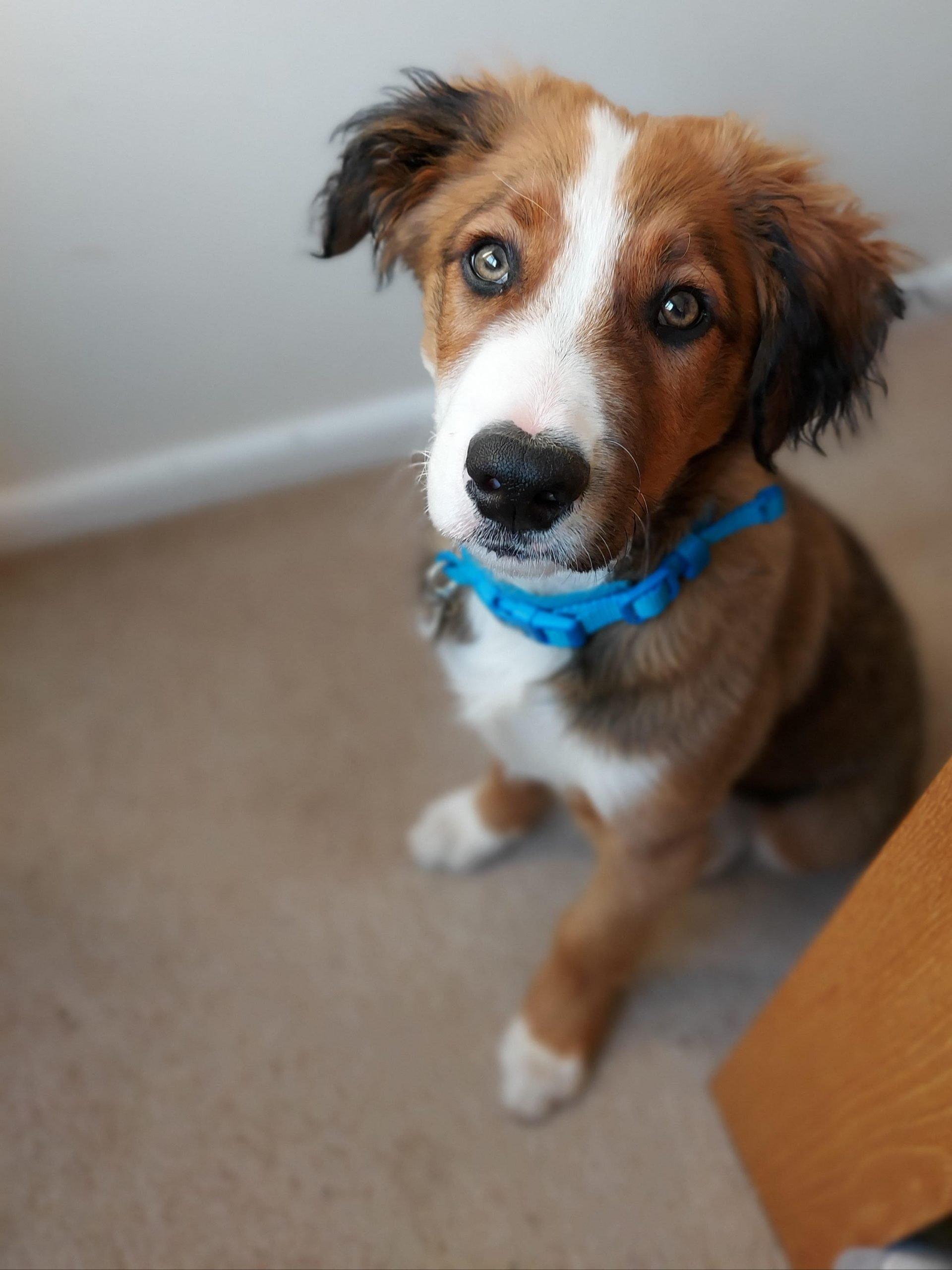 Dog Groomers Weymouth