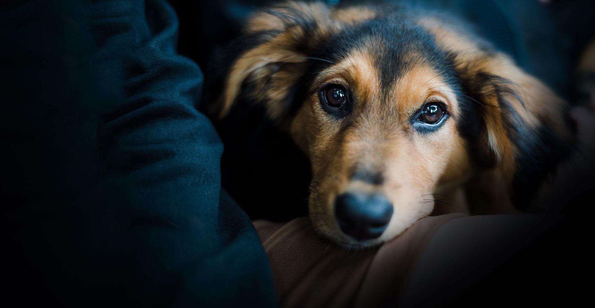 Pawsome dog Groomers - Weymouth Dog Grooming