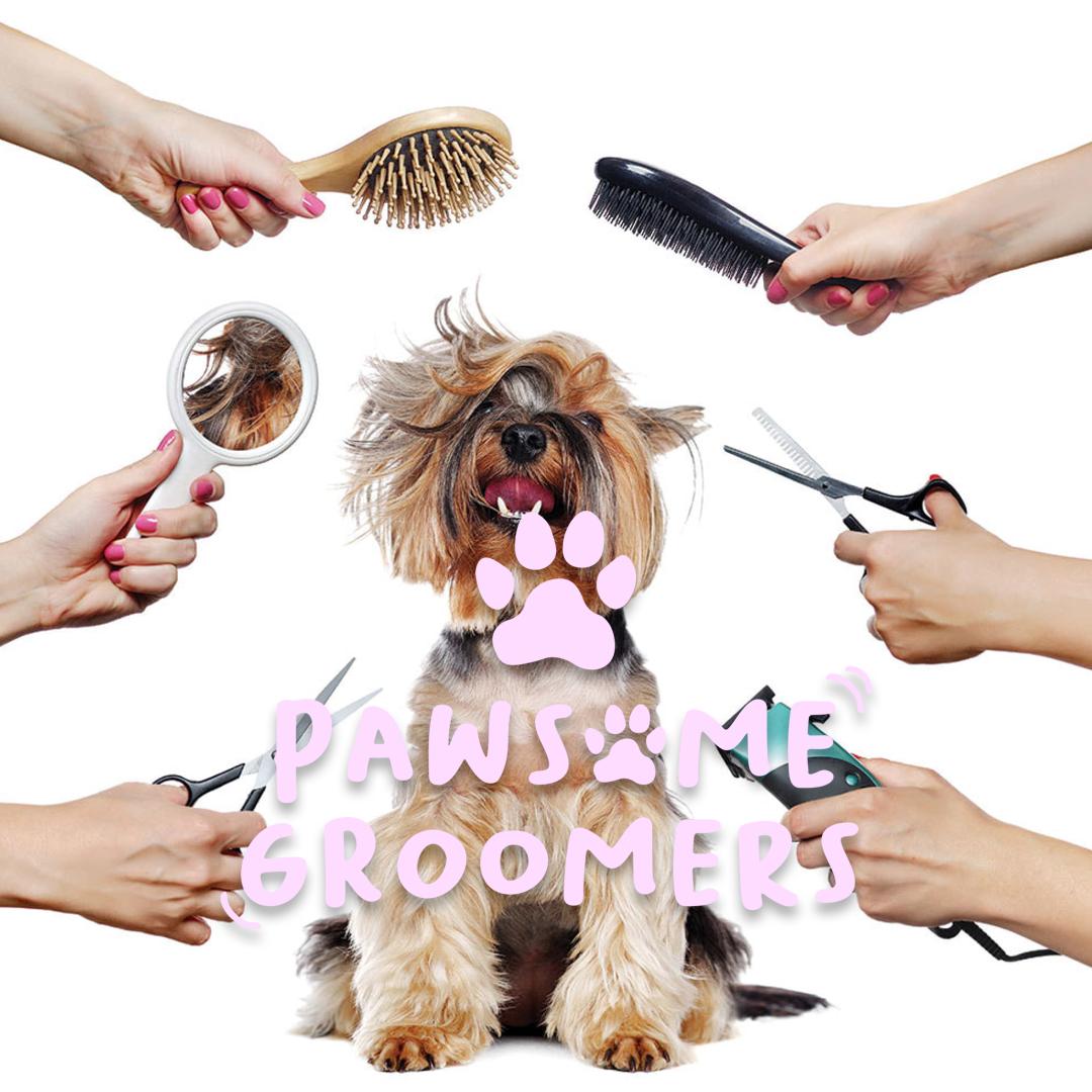 dog groomers Weymouth | PAWSOME Dog Grooming Salon Weymouth